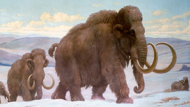 woolly-mammoth-with-Asian-elephant-shape
